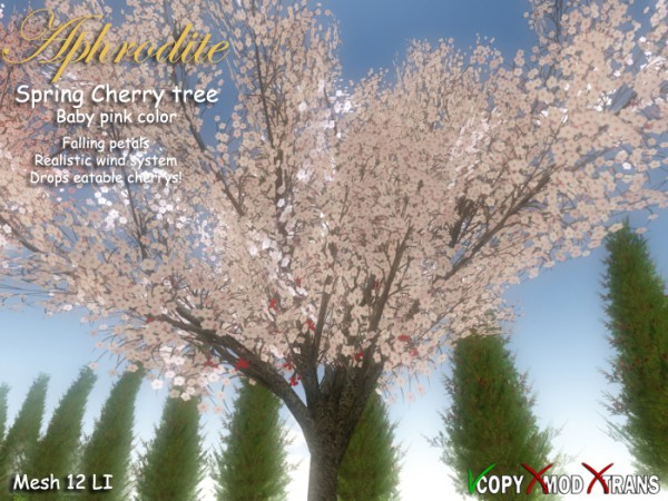 Aphrodite  Spring Cherry Tree Baby Pink